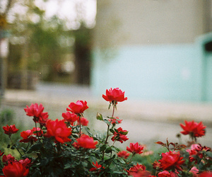 flowers, nature, and 35mm image