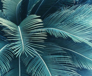 palms, plants, and tumblr image