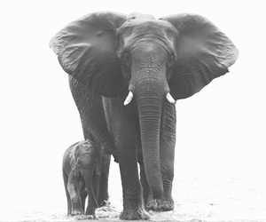 elephant, animal, and beautiful image
