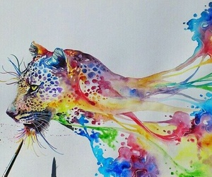 beautiful, colors, and cat image