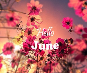 june, summer, and flowers image