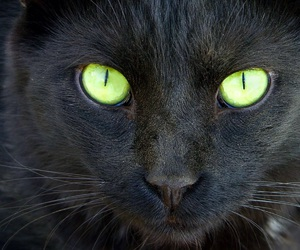 black, Cat Face, and green eyes image