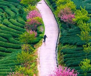 nature, green, and china image