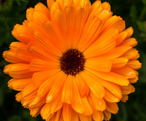 beauty, flowers, and orange image