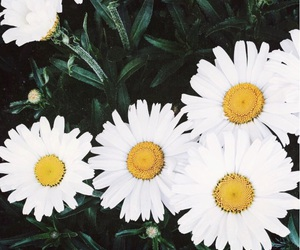 flowers, white, and yellow image