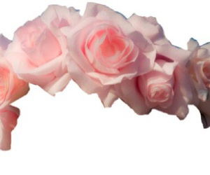 overlay, transparent, and flowers image
