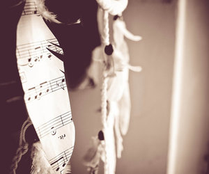 bird, feather, and music image