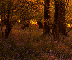 beautiful, low light, and woodland image