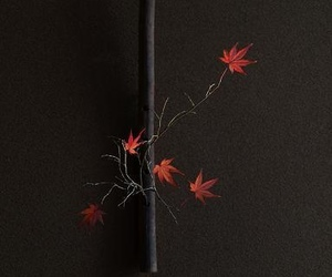 japan, red, and leaf image