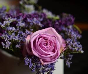 flower, pink rose, and velvet image