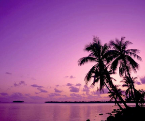 beach, palms, and pink image