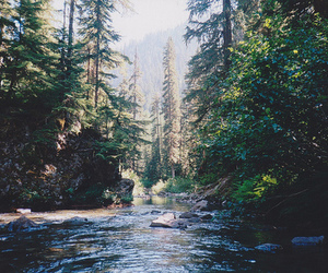 nature, tree, and river image