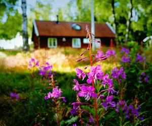 flowers, sweden, and wood image