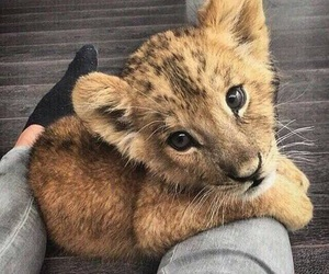 adorable, cub, and eyes image