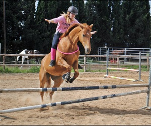 cheval, free, and horse image