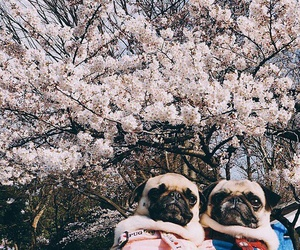 animal, dogs, and spring image