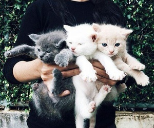 animal, cats, and pretty image