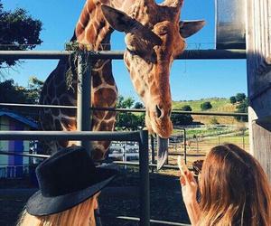 amazing, girl, and zoo image