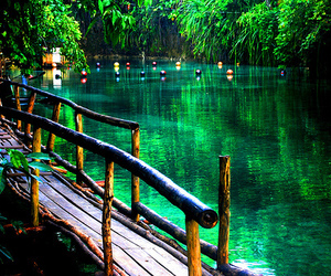 nature and green image
