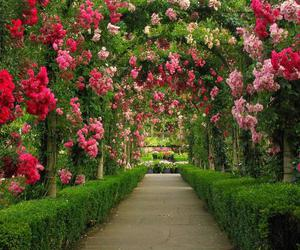 flowers, garden, and rose image