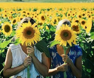 sunflower, spring, and summer image