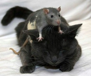 cat, friends, and mouse image