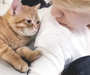 luhan, cat, and exo image