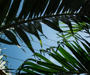 palm, sky, and summer image