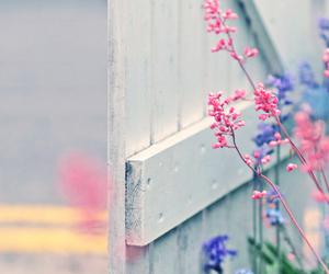 adorable, bokeh, and colorful image