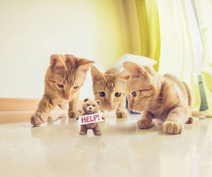 cat and help image