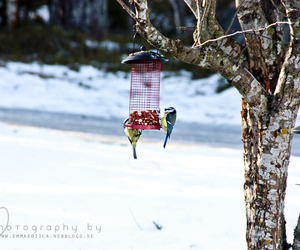 birds, photography, and winter image