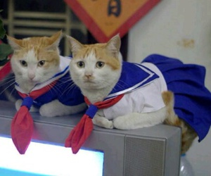 cat, japan, and kawaii image