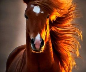 horse and stunning horse image