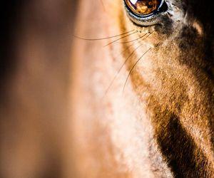 horse and eye image