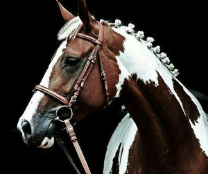horse, animals, and beautiful image