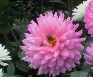 nature, bee, and flower image