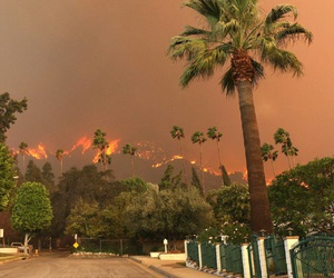 fire and palms image