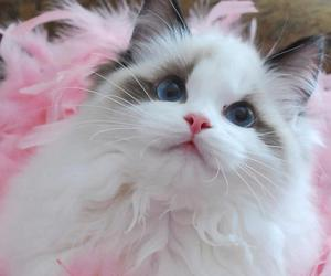 cat, pink, and kitten image