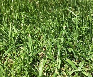 grass, green, and sun image
