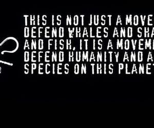 quote, Sea Shepherd, and vegan image