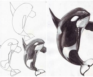 animal, art, and how to draw image