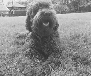 artistic, black and white, and cute dog image