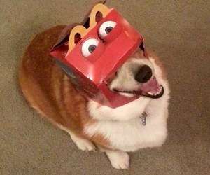 dog, funny, and McDonalds image