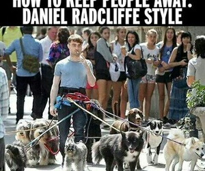 dog, daniel radcliffe, and funny image