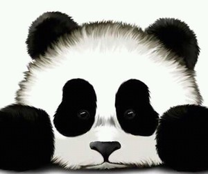 panda, white, and animal image