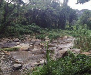 puerto rico, nature, and river image
