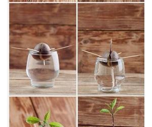 avocado, diy, and plants image