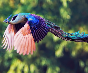 beautiful, colorful, and bird image