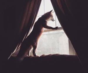 animals, window, and fox image