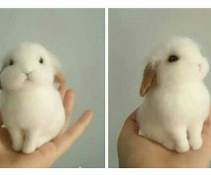 adorable, aww, and rabbits image
